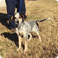 Adopt A Pet :: Debbie - Harrisonburg, VA