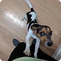 Adopt A Pet :: Riley - Birmingham, AL