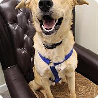 Adopt A Pet :: Quinn - Neosho, MO