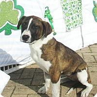 Adopt A Pet :: Gaellen - West Chicago, IL