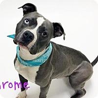 Adopt A Pet :: *CHROME - Sacramento, CA
