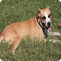 Adopt A Pet :: Kenlie - Lufkin, TX