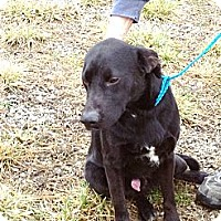 Adopt A Pet :: # 484-12 ADOPTED! - Zanesville, OH