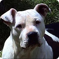Adopt A Pet :: AA-Darcy - Tyler, TX