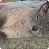 Adopt A Pet :: Stan - Columbus, OH