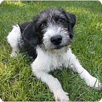 Adopt A Pet :: Lori Ann - Mocksville, NC