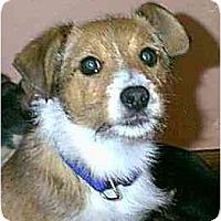 Adopt A Pet :: Cinnamon - dewey, AZ