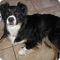 Adopt A Pet :: Romero - Washington, IL