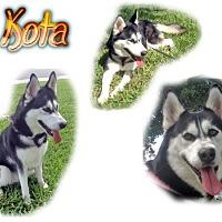 Adopt A Pet :: Kota - Seminole, FL