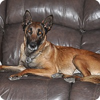 Adopt A Pet :: Sitka - Hamilton, MT