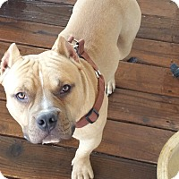 Adopt A Pet :: Cletus - grants pass, OR