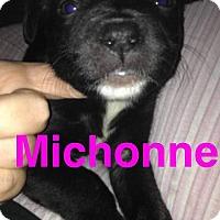 Adopt A Pet :: Michonne - Garden City, MI