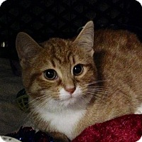 Adopt A Pet :: Porsha - East Brunswick, NJ