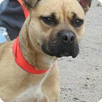 Adopt A Pet :: Woody - Charlotte, NC