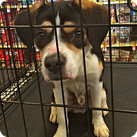 Adopt A Pet :: Darren in CT - Manchester, CT