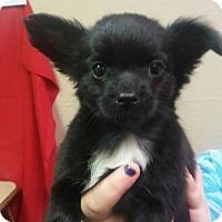 Adopt A Pet :: Valentina - Modesto, CA