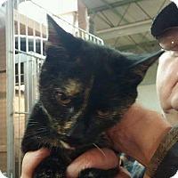 Adopt A Pet :: Nani - Trevose, PA
