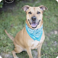 Adopt A Pet :: Bubba - Kingwood, TX