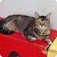 Adopt A Pet :: Ruby - Belleville, MI