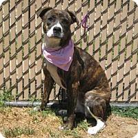 Adopt A Pet :: *BRIXLEY - Norco, CA