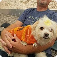 Adopt A Pet :: Mama - Livermore, CA