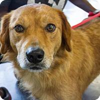 Adopt A Pet :: Ruffo - Enfield, CT