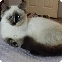 Adopt A Pet :: Gabrielle - Ennis, TX