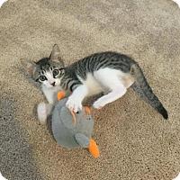 Adopt A Pet :: Bucky - ROSENBERG, TX