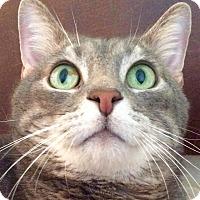 Adopt A Pet :: Billy the Kid - Mesa, AZ