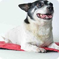 Adopt A Pet :: DESI - Ukiah, CA