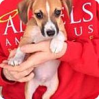 Adopt A Pet :: Trout - Alpharetta, GA