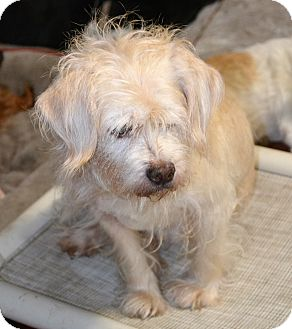 Terrier (Unknown Type, Medium) Mix Dog for adoption in Melrose, Florida - Stonewall