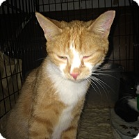 Adopt A Pet :: Foster with option to adopt - Clay, NY