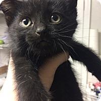Adopt A Pet :: Sal - St. Louis, MO