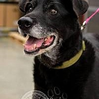 Adopt A Pet :: Cole - Salt Lake City, UT