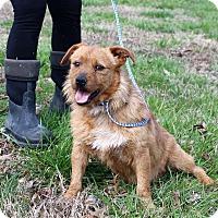 Adopt A Pet :: Deacon - Glastonbury, CT