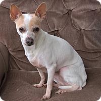 Adopt A Pet :: Delilah - Aqua Dulce, CA