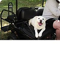Adopt A Pet :: Libby Lulu - Birmingham, AL