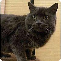 Adopt A Pet :: BlueBelle - Irvine, CA