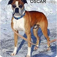 Adopt A Pet :: Oscar - Woolwich, ME