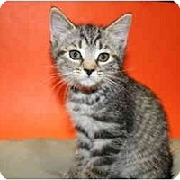 Adopt A Pet :: KATHY - SILVER SPRING, MD
