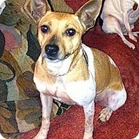 Adopt A Pet :: Flame - Dayton, OH