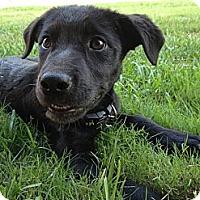 Adopt A Pet :: Indiana
