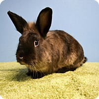 Adopt A Pet :: Moose - Fountain Valley, CA
