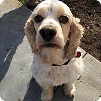 Adopt A Pet :: RHETT - Santa Barbara, CA