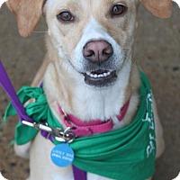 Adopt A Pet :: Rico - Washington, DC
