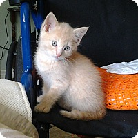 Adopt A Pet :: Tamsin - Mississauga, Ontario, ON