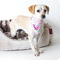 Adopt A Pet :: *SANDY - Sacramento, CA