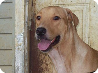 Labrador Retriever Mix Dog for adoption in Portland, Maine - Spencer