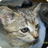 Adopt A Pet :: Kia - Mexia, TX